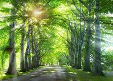 Voie par la forêt Photographie stock libre de droits