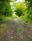 Voie par la forêt Image libre de droits