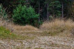Voie par la forêt Photos libres de droits