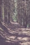 Voie par la forêt conifére Photo stock