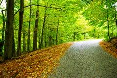 Voie par la forêt d'automne Image libre de droits