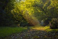 Voie par la forêt d'automne Photographie stock