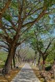 Voie par les arbres arqués Photographie stock