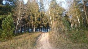 Voie par une forêt Image libre de droits
