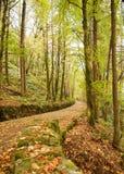 Voie rayée par arbre en automne Photo libre de droits