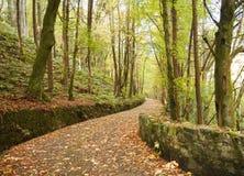 Voie rayée par arbre en automne Images stock