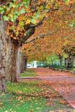 Voie rayée par arbre en automne Photos stock