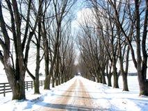 Voie rayée par arbre de l'hiver Image stock