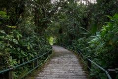 Voie scénique au milieu du bois de Gede Pangrango Mountain photographie stock libre de droits