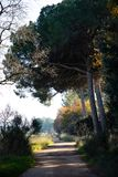 Voie tous terrains dans les bois le matin d'hiver photos libres de droits