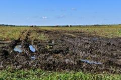 Voies boueuses de tracteur dans un domaine de soja photo libre de droits