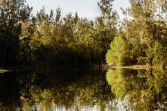 Voies d'eau naturelles de la Floride photos stock