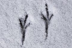 Voies d'oiseau dans la neige Photos libres de droits