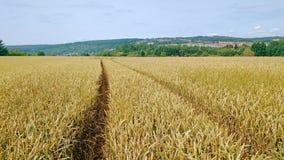 Voies dans un domaine de blé Photo stock
