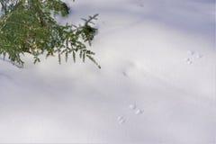 Voies de champ d'hiver préservées dans la neige croustillante image libre de droits