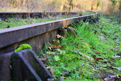 Voies de chemin de fer abandonnées dans la forêt Photos stock