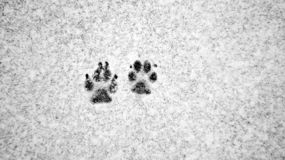 Voies de chien dans la neige photo stock