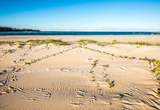 Voies de kangourou sur la plage Images stock