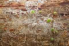 Voies de termite Image libre de droits