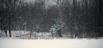 Voies neigeuses simples de pneu - portrait Images libres de droits
