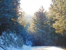 Voies neigeuses simples de pneu - portrait Photos libres de droits