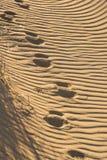 Voies profondes sur le sable cannelé image stock