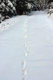 Voies sauvages de loup dans la grande neige image stock