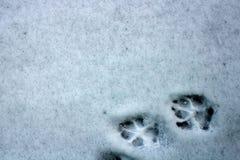Voies sortantes du chien sur la première neige image libre de droits