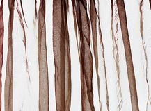 Voile curtain dark brown Royalty Free Stock Photos