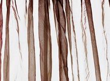 Voile curtain dark brown Royalty Free Stock Photos