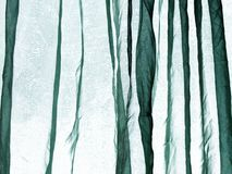 Voile curtain green Stock Image