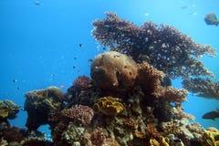 Voile sous-marine d'Eilat Image libre de droits