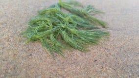 Voir l'herbe Photo libre de droits