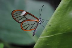Voir le papillon de cuvette photo stock