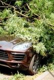 Voiture détruite par un arbre tombé pendant l'ouragan photo stock