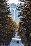 Voiture dans le chemin forestier Image stock