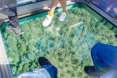 Voiture de Ngong Ping Cable de verre cristal avec des touristes au-dessus de montagne, pour rendre visite à Tian Tan ou au grand  photos libres de droits