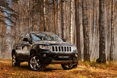 Voiture de SUV dans la forêt Image stock