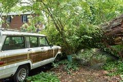 Voiture préjudiciable de grand arbre dans la tempête Images stock