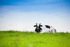 Voiture s'étendant sur l'herbe Image libre de droits