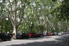 Voitures garées sur la rue bordée d'arbres Photo libre de droits