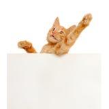 Voix pour les chats rouges ! photographie stock