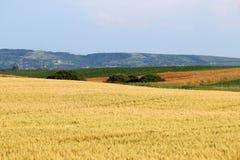 Vojvodina del paesaggio del terreno coltivabile del giacimento di grano Immagini Stock Libere da Diritti
