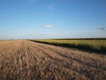 Vojvodina fields 3 Royalty Free Stock Photo