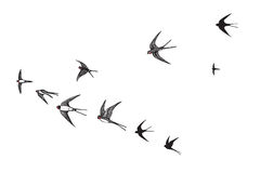 Volée d'hirondelle de silhouette d'oiseaux Photographie stock