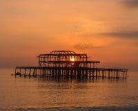 Volée d'oiseau au-dessus du pilier occidental de Brighton au coucher du soleil Images libres de droits