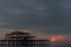Volée d'oiseau au-dessus du pilier occidental de Brighton au coucher du soleil photos libres de droits