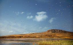 Volée de petits oiseaux au-dessus de lac de sel marécageux Image stock