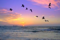 Volée des oiseaux à l'arrière-plan du lever de soleil de mer Photographie stock
