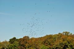 Volée des oiseaux Image libre de droits